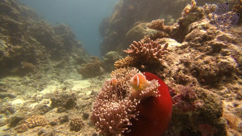 Nemo\'s Geschwister